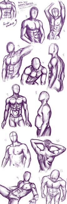 anatomy1