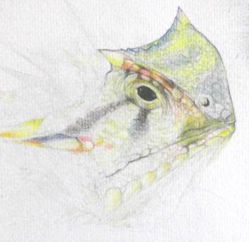 lizard practice
